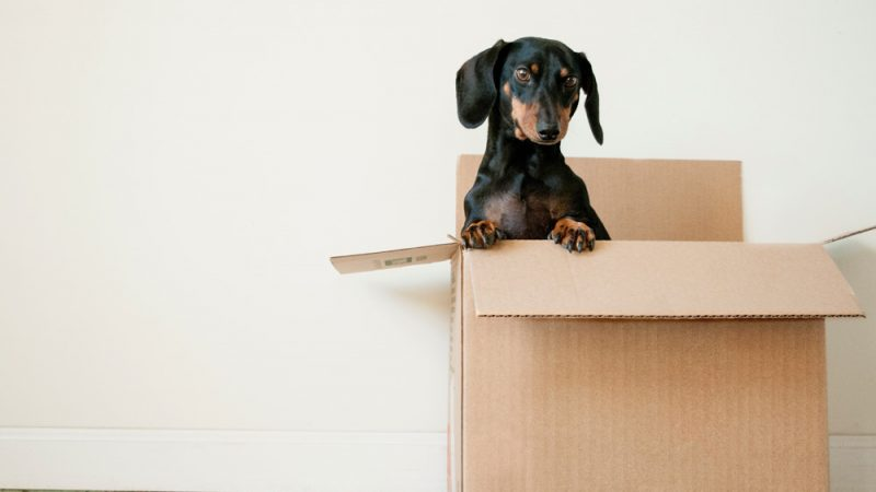 How to Simply Move Your Business